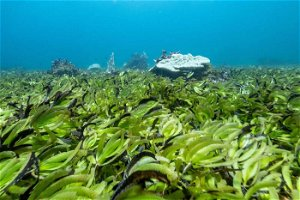 Scientists warn sea grasses store twice as much carbon dioxide as forests, but we are destroying them quickly