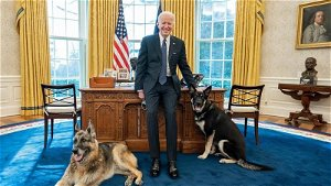 CNN: Bidens' dogs removed from the White House