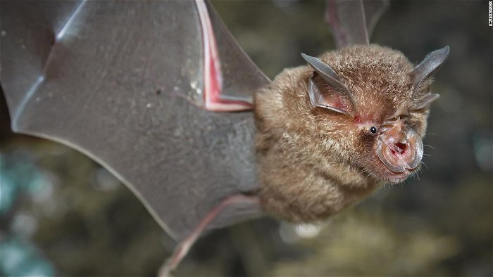 Chinese researchers say new batch of coronaviruses found in bats