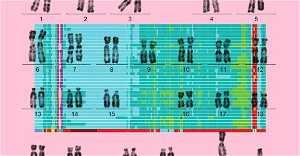 The Human Genome Is—Finally!—Complete