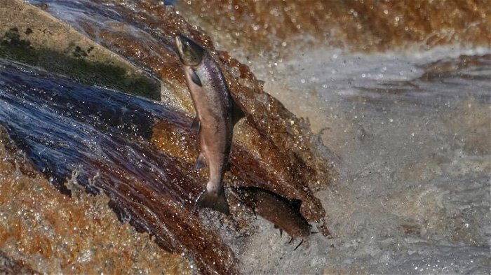 Third of freshwater fish threatened by extinction with habitats in 'catastrophic decline'
