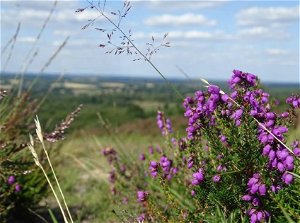 Environmental Audit Committee calls for the Government to conserve and restore UK biodiversity and ecosystems