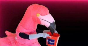 Can You Guess Which Broadway Star Is The Flamingo?