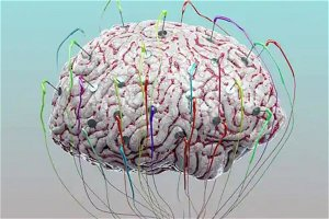 IIT-M, MIT scientists grow Human Brain tissues for research on Cancer, Alzheimer's, Parkinson's