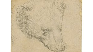Da Vinci bear drawing is expected to sell for €13.8m