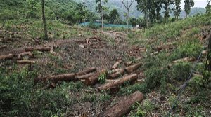 RTI: Goa authority showed green flag to 99.3% felling tree cut requests