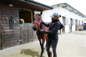 DSPCA advice to keep horses safe this Halloween