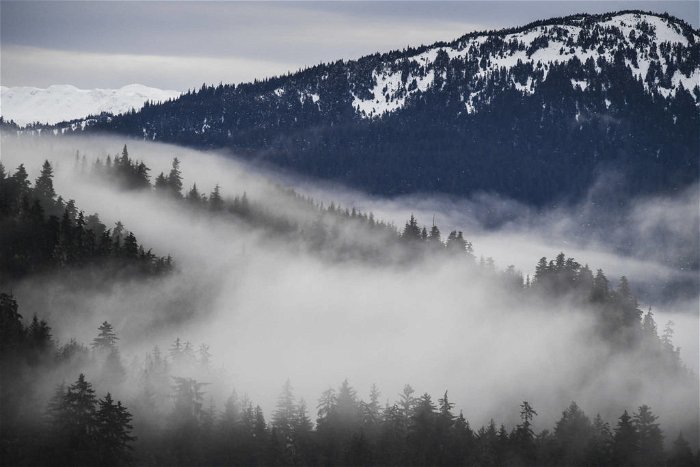 Alaskan tribes and nonprofits file suit to save America's largest national forest