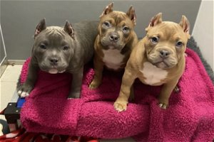 Abused puppies find new homes after being rescued from illegal breeder