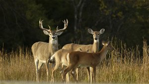 DNR enrolling property owners in hunting access program
