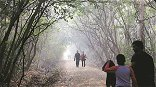 Cold conditions to return in Maharashtra by Jan 21: IMD