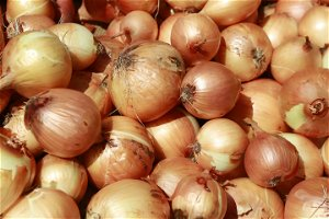 Salmonella outbreak traced to onions imported from Mexico