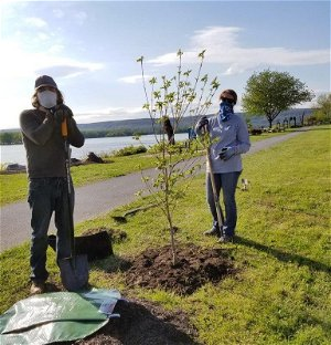 Leafy Lessons: Harrisburg to offer tree workshops, seeks volunteers to help plant, maintain