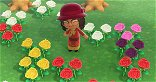 How to Crossbreed Flowers in Animal Crossing: New Horizons