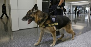 [Opinion] 'Hero' police dog survives after being shot in the face by murder suspect