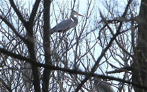 Environmental worksheet filed in connection to development at heron nesting site