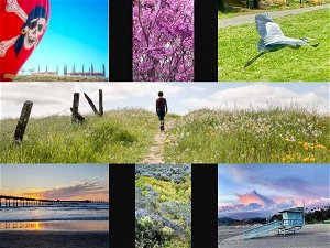Wild Lilac; Great Blue Heron; Cotton Candy Skies: CA In Photos