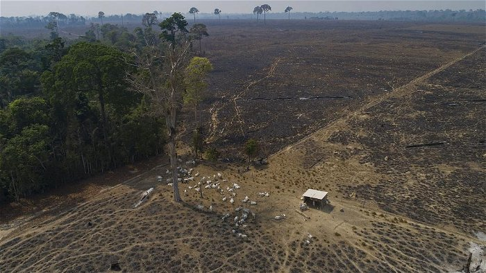 EU is the world's second biggest importer of tropical deforestation