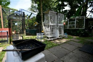 NParks to open wildlife rehabilitation facility as Singapore becomes a City in Nature