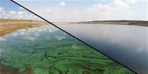 Israeli Scientists Working to Cure Lakes Struck 'Blue-Green' by Toxic Algae