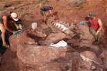 Dinosaur fossils found in Argentina could belong to the world's largest-ever creature