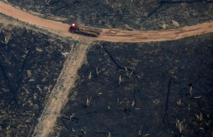 Brazil's Amazon: Deforestation 'surges to 12-year high'