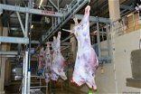 State to Build Animal Slaughterhouse