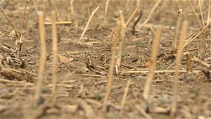 AgriStability interim benefit increase announced for Sask. producers