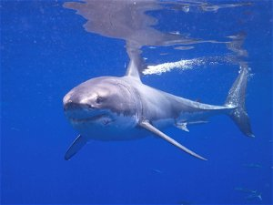 Shark museum to open at site of pirate museum in Provincetown