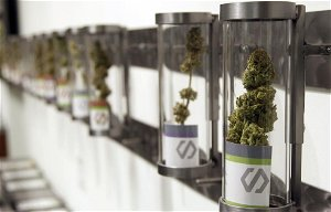 Redwood City readies for weed shops