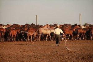 Origin of domestic horses finally established