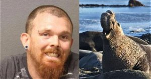 Man gets prison for killing California elephant seal