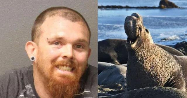 Man gets prison for killing California elephant seal