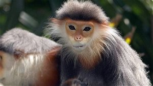 Five critically endangered monkeys shot dead in Vietnam