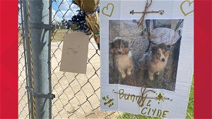 Fire at Central Texas pet resort leaves at least 75 animals dead, fire officials say