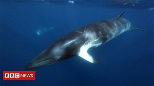 Backlash against 'frightening' tests on whales