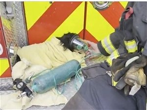 Dog Rescued From Fire   Scarecrow Scavenger Hunt: Saturday Smiles