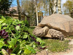 Hit the  Easter trail at Lincolnshire Wildlife Park