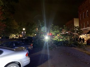 Hamilton County to foot the bill after tree falls and crushes 4 parked cars