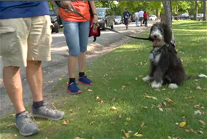 'They're angels without halos': Winnipeg dog-owners come together to support cancer care organization