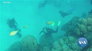 UNESCO Leaves Australia's Great Barrier Reef Off Endangered List
