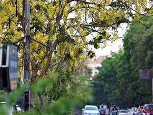 Overcast conditions in Pune to prevail till April 15: IMD